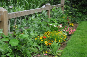 Sept 2014 garden with fence