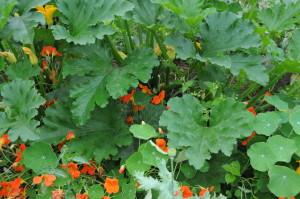 Sept 2012 veg garden