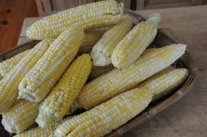 Sept 20121 corn