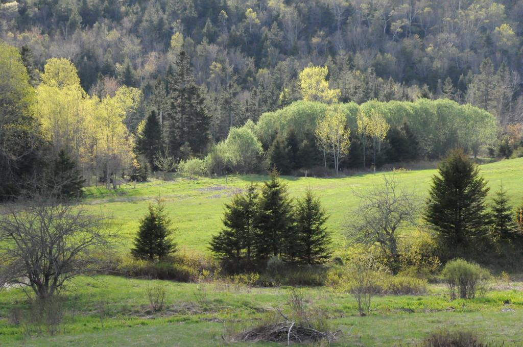 Sept 2014 srping florest DSC_2359