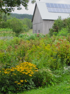 Sept 2014 garden