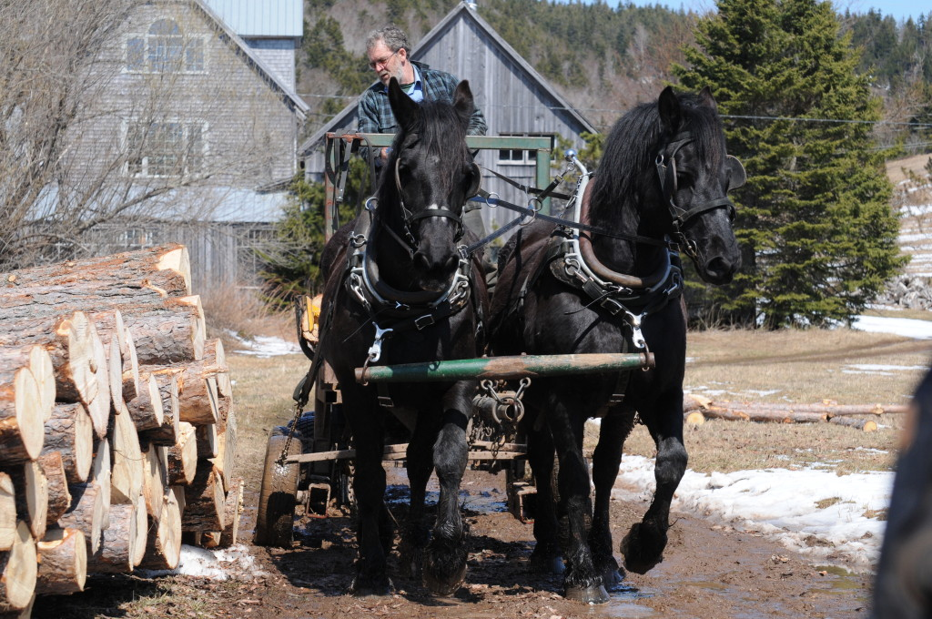 Winter 2009 horse logging-9