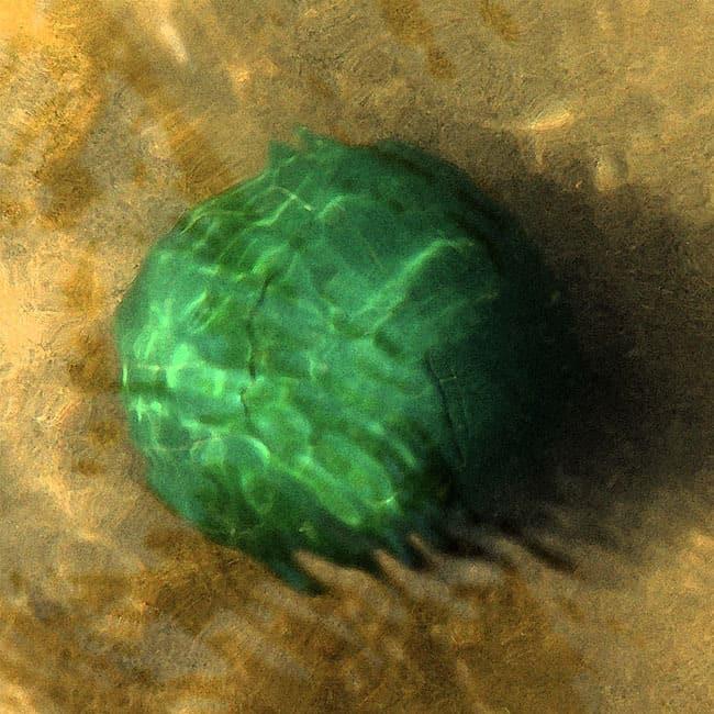 Water Sphere TP2/2