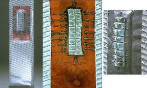 Zygotic Dolmen specimen 1.2